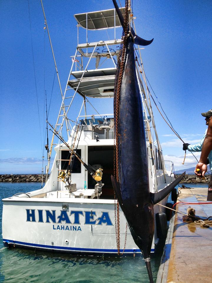 Fish caught sport fishing off maui hawaii for Sport fishing hawaii